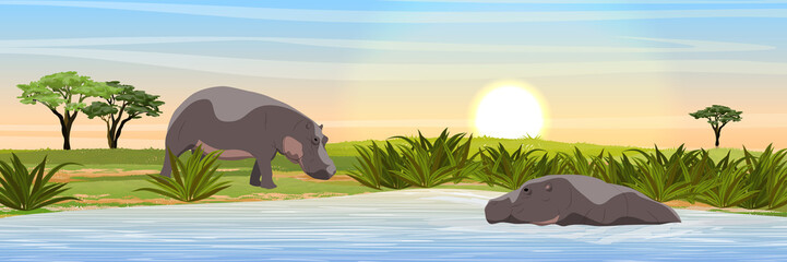 Two hippos in the savannah. Hippo swimming in the lake. Wild animals of Africa. Realistic Vector Landscape