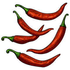 Set of chili pepper illustrations on white background. Design element for poster, card, banner, menu.