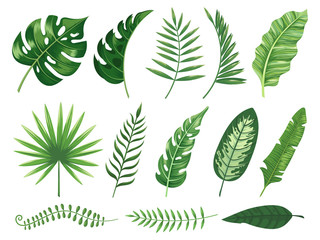 Exotic tropical leaves. Monstera plant leaf, banana plants and green tropics palm leaves isolated vector illustration set Wall mural