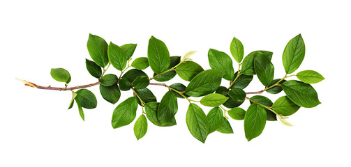 Fresh branch with green leaves