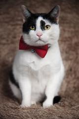 elegant metis cat sitting on brown fur looks to side
