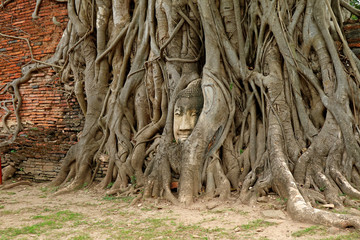 Sandstone Buddha Image's Head Trapped in the Tree Roots at Wat Mahathat Ancient Temple, Ayutthaya Historical Park, UNESCO World Heritage Site in Thailand