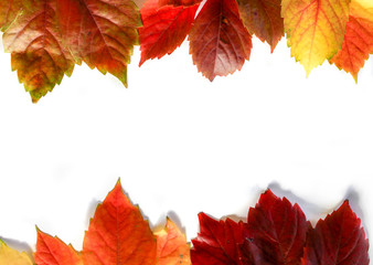 Colorful leaves over the white board, background composition. Blank space for text.