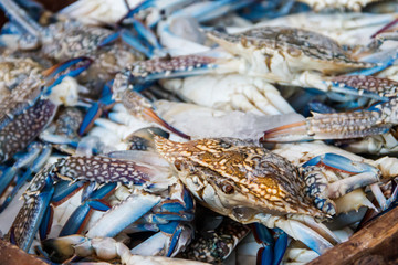 Raw fresh blue crabs for sale in fish market
