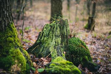 Totholzverjüngung
