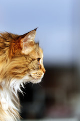 One of the most beautiful cat pictures