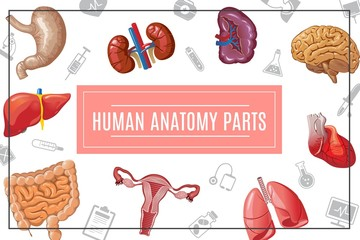 Cartoon Human Body Organs Concept