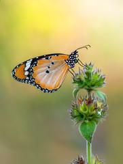Beautiful butterflies sitting on flower