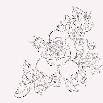 Vector rose with wild flower. Element for design. Hand-drawn contour lines and strokes.