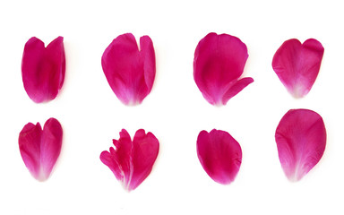 red peony petals isolated on white background set