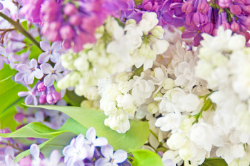 lilac flowers bunch background