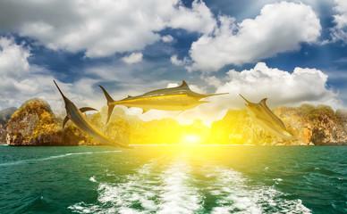 Blue Marlin fish sun