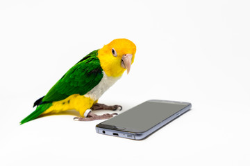 A bird is standing front of a cellphone