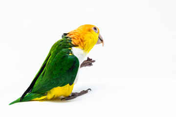 An exotic parrot is eating some nut