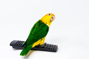 A bird is standing on a remote control and looking behind