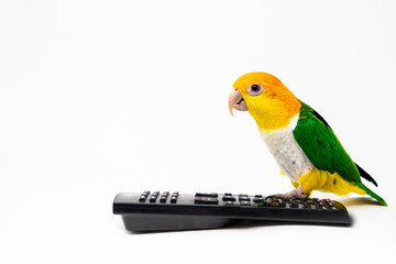 A bird is standing on a remote control and looking straight front