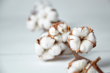 A branch of soft cotton flowers is lying on a white wooden table