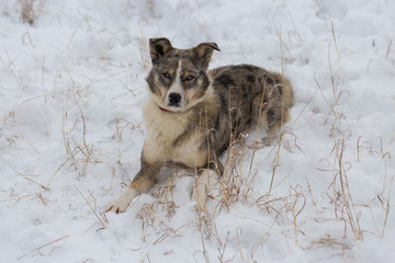 Dogs play in the snow in winter, Beautiful portrait of a pet on a sunny winter day