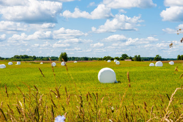 Many white sacks of mown and packed hay laid out on the green field surrounded by scenic landscape