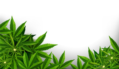Marijuana plant and cannabis on white backgrounds.