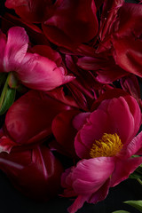 Close Up of Dark Pink Peonies