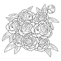 Peony flower graphic sketch black white isolated bouquet background illustration vector
