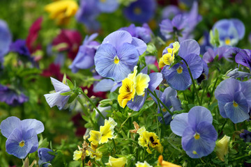 flowerbed with different flowers pansies