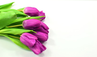 Valentines day concept with tulip flowers on the white background