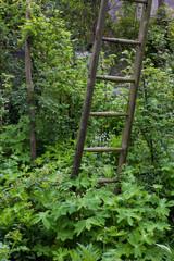 A wooden ladder in a garden