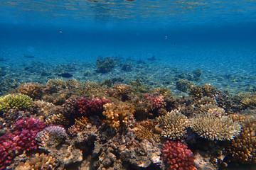 In de dag Koraalriffen coral reef in egypt