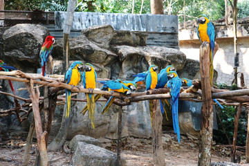 Group of Colorful Macaws Sitting on Branches