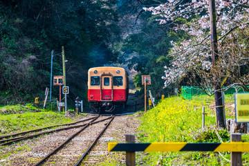 菜の花とローカル鉄道