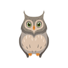 Cute owl, lovely bird cartoon character front view vector Illustration