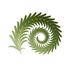 Twig fern curl. Vector image isolated on white.