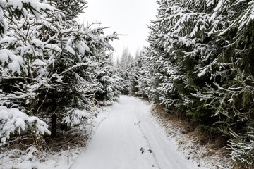 Path with trees and snow