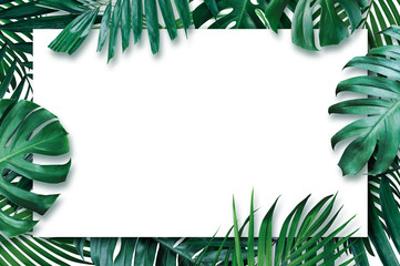 Summer tropical leaves with blank paper on white background Wall mural