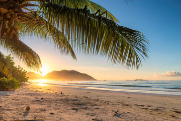 Fototapete - Tropical beach at sunrise with palms in Jamaica island. Summer vacation and travel concept.