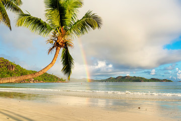 Coco palm and rainbow on exotic tropical beach at morning in Seychelles.