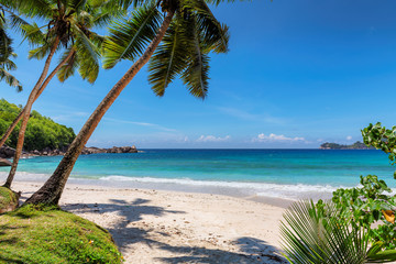 Palms and tropical beach with white sand. Summer vacation travel holiday background concept. Caribbean paradise beach.