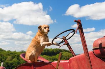 Dog on Vintage red tractor in landscape
