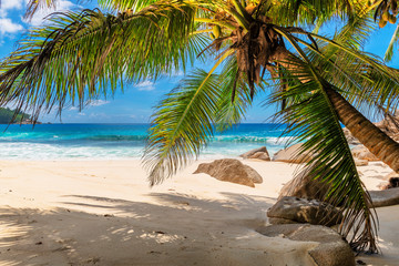 Aluminium Prints Beach Tropical beach with palms and turquoise sea in Seychelles island.