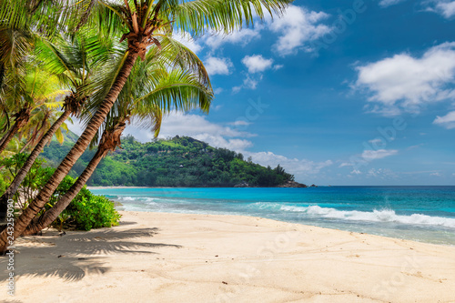 Wall mural Beautiful beach with palms and turquoise sea in Jamaica island.