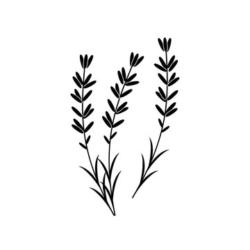 Lavender vector icon on white background.