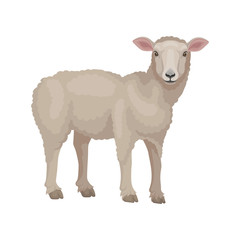 Detailed flat vector design of young lamb, side view. Sheep with beige wool coat. Domestic animal. Livestock farming