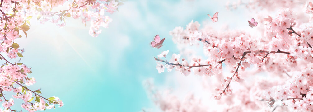 Spring banner, branches of blossoming cherry against background of blue sky and butterflies on nature outdoors. Pink sakura flowers, dreamy romantic image spring, landscape panorama, copy space.