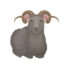 Flat vector icon of lying male sheep. Ram with gray wool and long curved horns. Domestic animal. Livestock farming