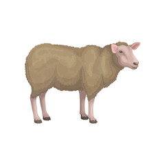 Detailed flat vector icon of young sheep. Domestic animal with brown woolly coat, pink face and legs. Livestock farming
