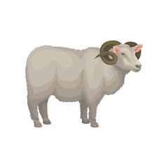Detailed flat vector icon of male sheep. Adult ram with gray wool and curved horns. Domestic animal. Livestock farming