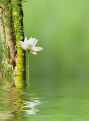bambous à noeud et lotus avec reflets sur toile