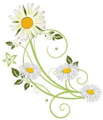 Filigrane Ranke mit Margerite, Gänseblümchen, Blüte und Blättern. Sommerliche Wiesenblumen. Grün und weiß.